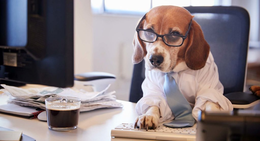 Beagle at the Computer