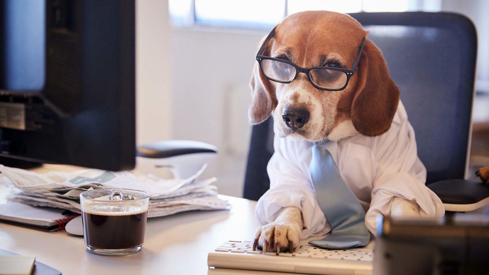 Beagle at the Computer